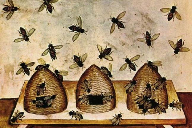 500 вопросов по пчеловодству